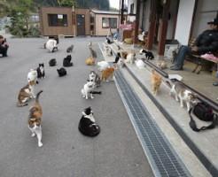 猫寺 御誕生寺
