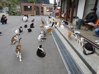 ネコがいっぱい
