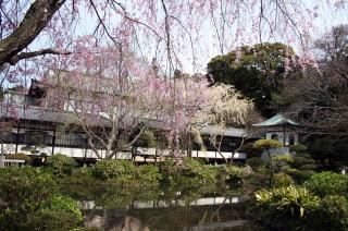 遊行寺 放生池